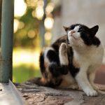prevenire pulci e zecche, gatto che si gratta